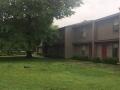 courtyard tree 2614 Kantz Dr (2)